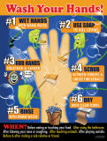 Bacteria & Diseases