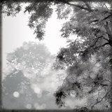 Wild Apple Photography