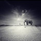 Animals (Trigger Images)