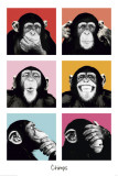 Primates: Apes & Monkeys