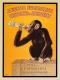 Primates: Apes & Monkeys