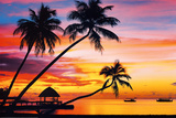 Tropical Sunsets