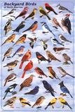 Bird Charts