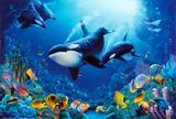 Sea Life & Sea Creatures