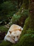 Jed Weingarten/National Geographic My Shot