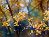 Autumn Forests