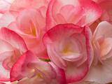 Floral Natl. Geo.