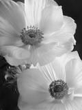 Anemones
