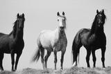 Animals (Danita Delimont)