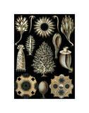 Microscopic Life