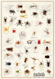 Arachids by Species