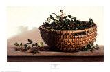Plants by Arrangement