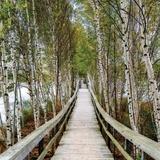 Country Bridges (Photography)
