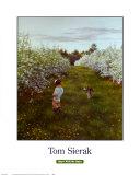 Tom Sierak