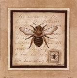 Bee & Wasp