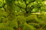 Natural Landscapes (Nature Picture Library)
