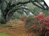 Plantations (Color Photography)