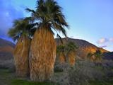 Desert Botanical