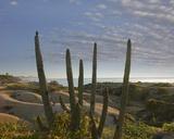 Baja, CA