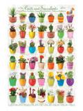 Cactus & Cacti