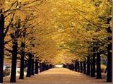 Fall & Holiday