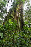 Central America (Danita Delimont)