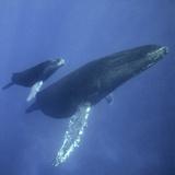 Hawaiian Islands Humpback Whale National Marine Sanctuary
