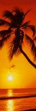Tropical Beaches