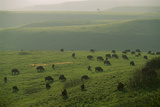 Prairies