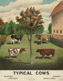 Cattle (Vintage Art)