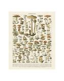 Vintage Botanical & Illustration