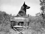 Rin Tin Tin (Movies)