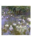 Botanical Scenes