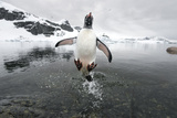 Penguins (Nature Picture Library)