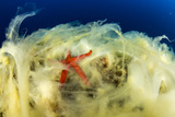 Starfish (Nature Picture Library)