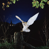 Owls (Nature Picture Library)