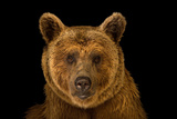 Photo Ark (National Geographic)