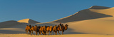 Desert Landscapes (Panoramic Images)