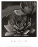 Dana Buckley
