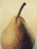D'Anjou Pear