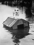 Dog Floating on Doghouse