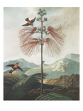 Illustration Depicting Hummingbirds Feeding from a Plant