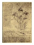 Drawing of Flowers and Diagrams by Leonardo da Vinci Giclée par Bettmann