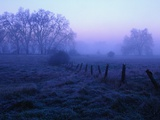 Meadow in the Morning Mist