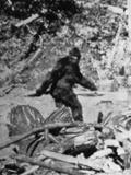 Alleged Photo of Bigfoot Papier Photo par Bettmann