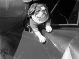 Le chien prend l'avion Papier Photo par Bettmann