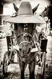 ¡Viva Mexico! B&W Collection - Horse with a straw Hat