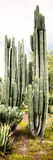 ¡Viva Mexico! Panoramic Collection - Cactus IV Papier Photo par Philippe Hugonnard