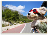 Road Trip Happy Dog with Red Sunglasses