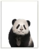 Baby Panda Studio Photo
